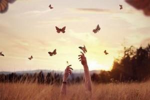 farfalle-in-liberta